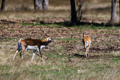 Venado-Springs-Exotics-Whitetail-Deer-Hunting-Hill-Country-Texas-143