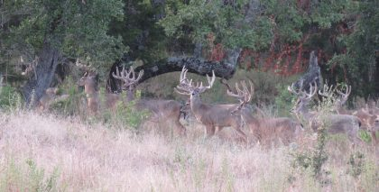 Venado-Springs-Exotics-Whitetail-Deer-Hunting-Hill-Country-Texas-160