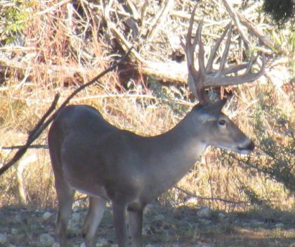 Venado-Springs-Exotics-Whitetail-Deer-Hunting-Hill-Country-Texas-167